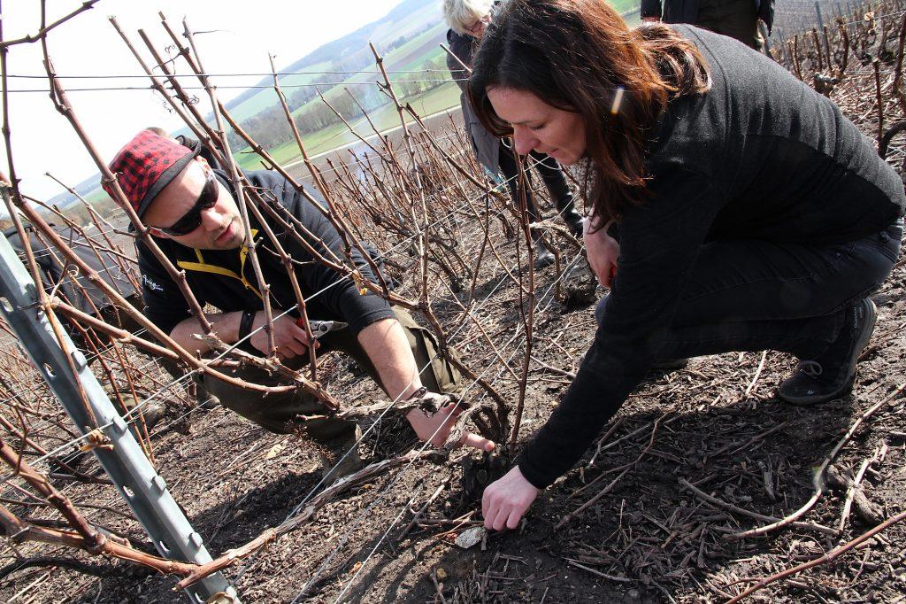 Former les futurs producteurs de l'AOC Champagne