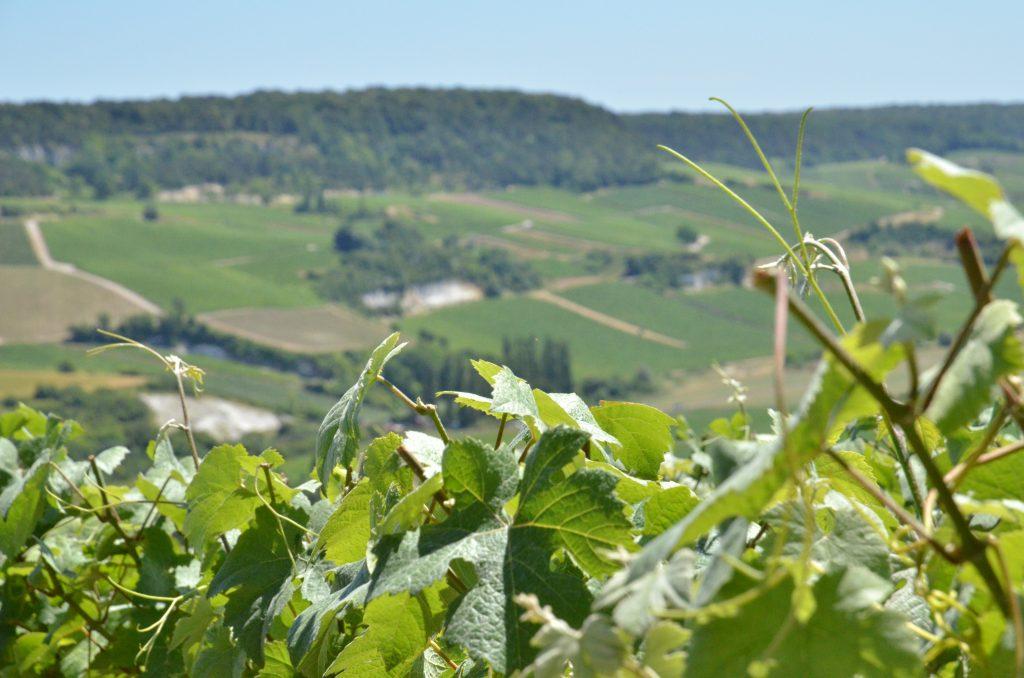 Montrer le trait d'union entre le travail à la vigne et la rencontre entre le champagne et ses consommateurs