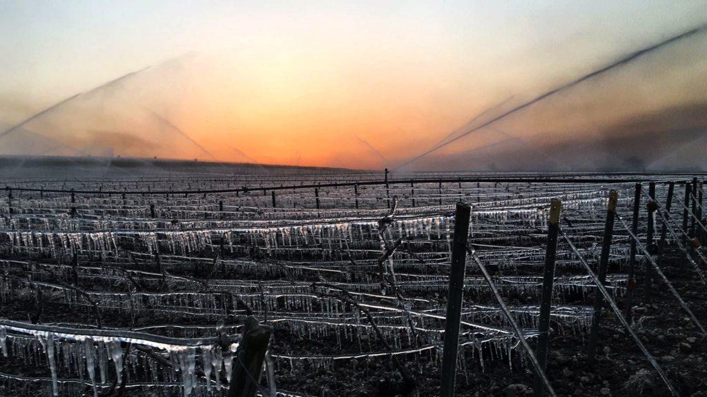 Onze nuits de haute lutte pour sauver la récolte