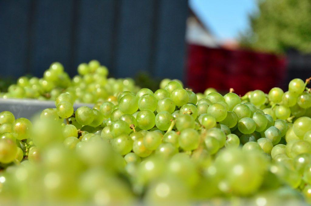 Le Centre Vinicole – Champagne Nicolas Feuillatte veut sensibiliser aux qualités plurielles