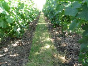 Entretien mécanique des sols : quels outils, quelles stratégies adopter ?