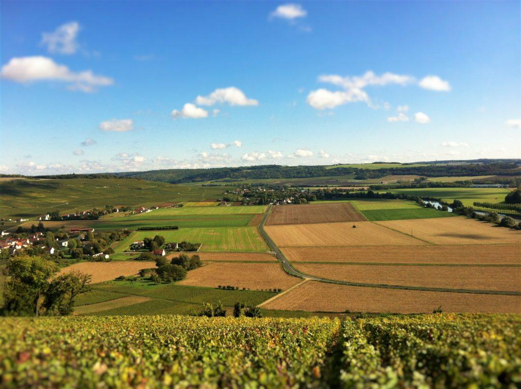 Azy-sur-Marne : terroir d'excellence au cœur d'un amphithéâtre