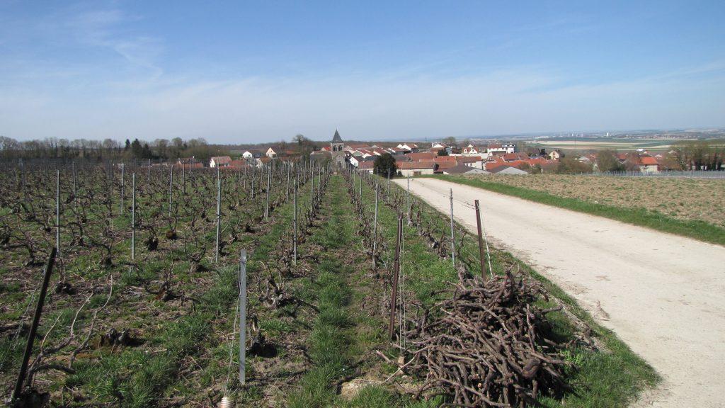 Berru, un vignoble tourné vers l'exigence environnementale
