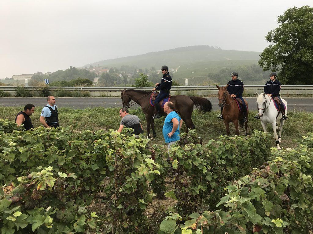 Les vignes sous bonne Garde