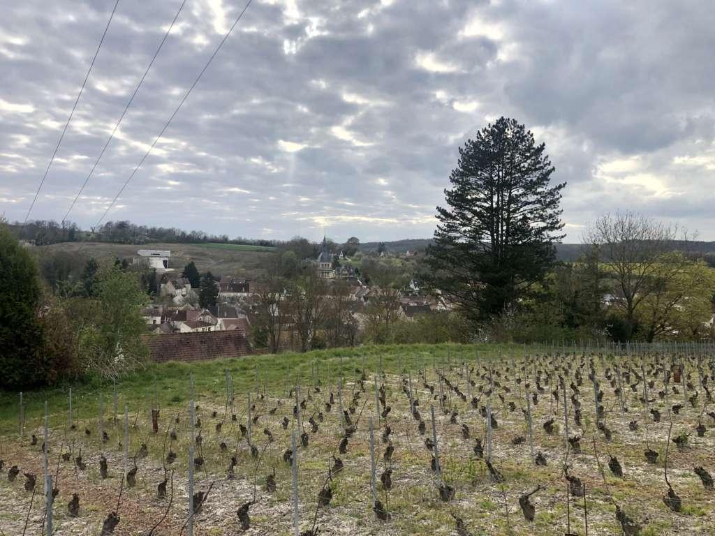 Chézy-sur-Marne: une belle harmonie entre vignerons et négoce