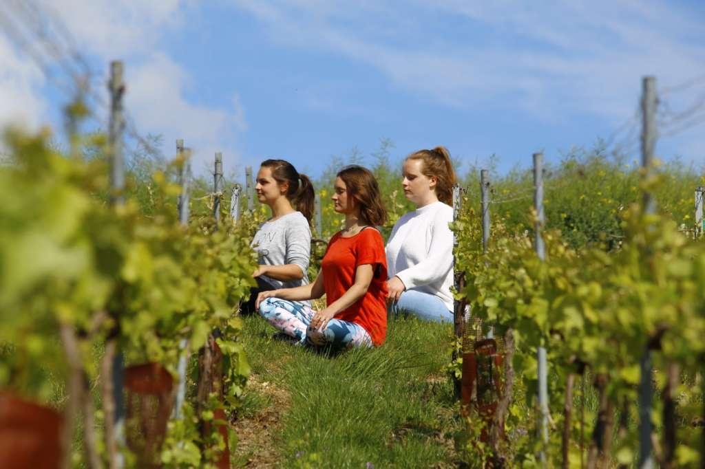 Expériences zen près de Reims avec le Champagne Charton-Guillaume