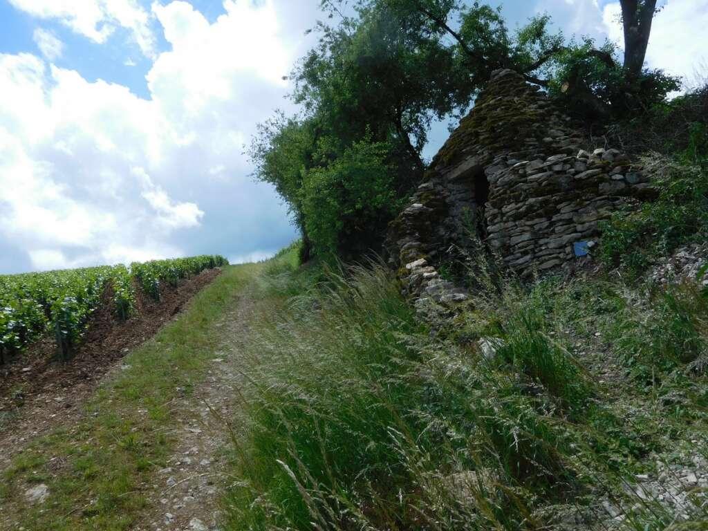 Etude sur les cadoles : la Mission Coteaux, Maisons et Caves de Champagne lance un appel