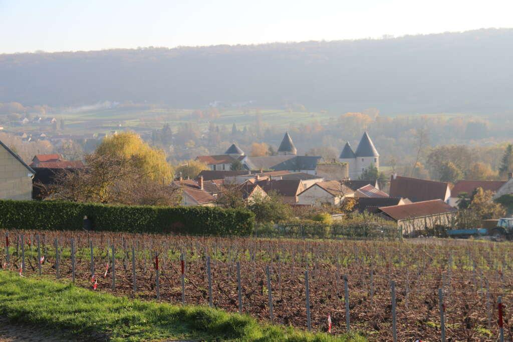 Passy-sur-Marne : la culture de la vigne dans son ADN