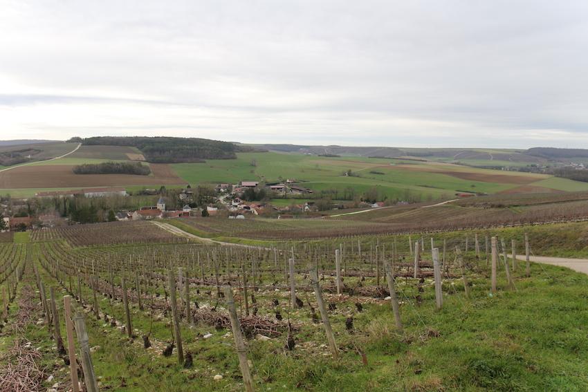 Urville: un des fleurons du barrois viticole