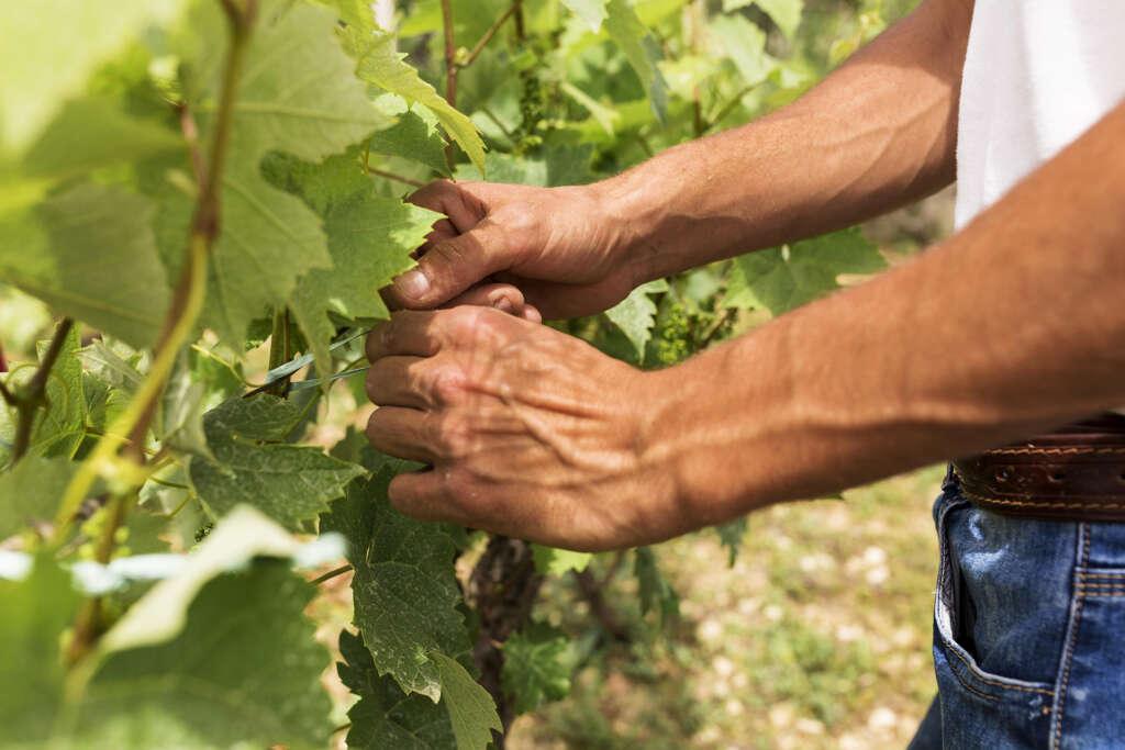Burn-out: les viticulteurs moins exposés que les autres exploitants