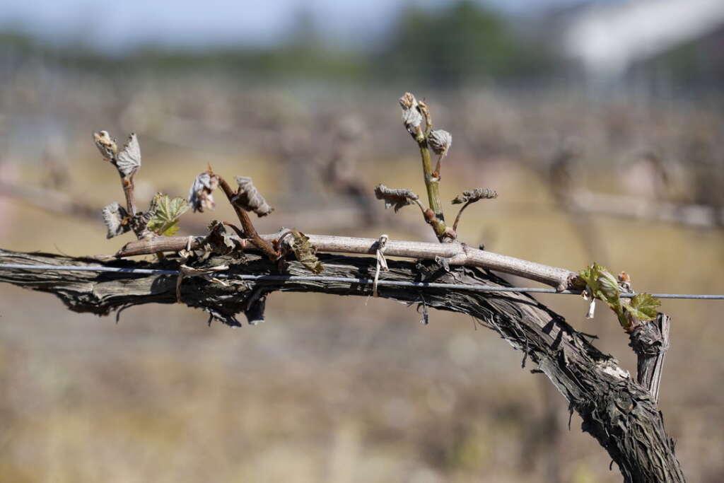 Les mesures déployées pour soutenir les viticulteurs touchés