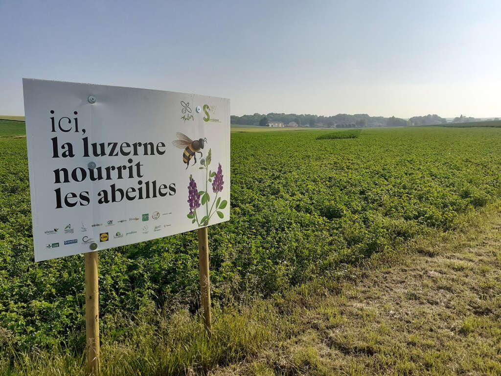 Apiluz: au bonheur des abeilles