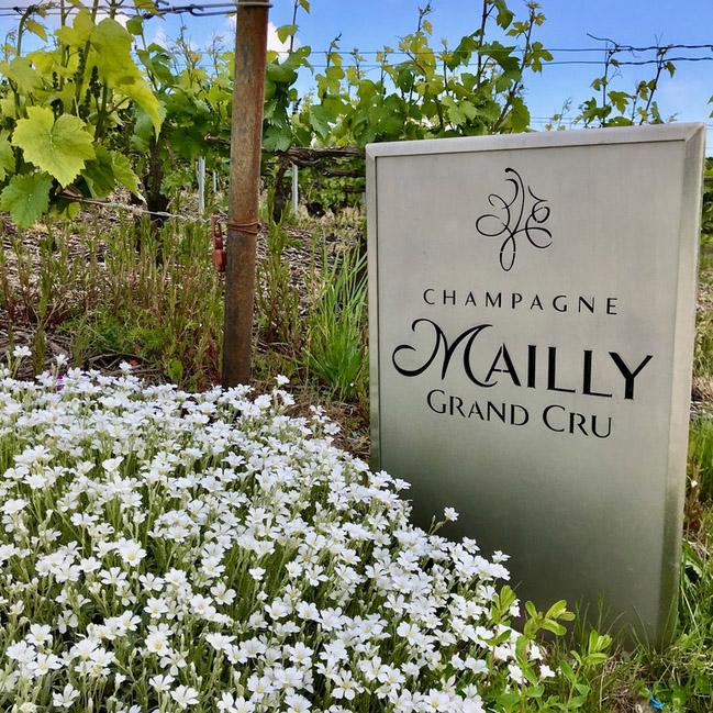 Mailly Grand Cru creuse le sillon de la viticulture durable